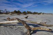 21st Jan 2019 - Hunting Island driftwood