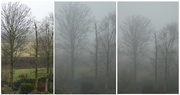21st Jan 2019 - fog coming down