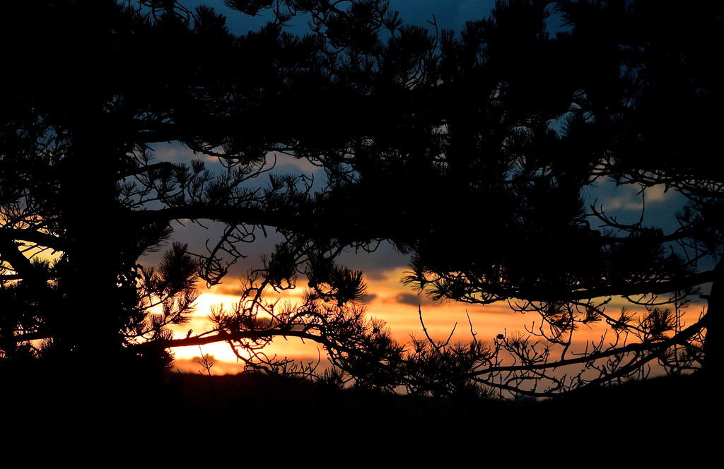 Sunset through the Pines by redandwhite