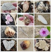22nd Jan 2019 - Beach Treasures