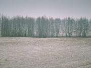 21st Jan 2019 - Snowless winter