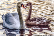 22nd Jan 2019 - A mothers love