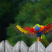 I think the Lorikeet is praying! by gigiflower