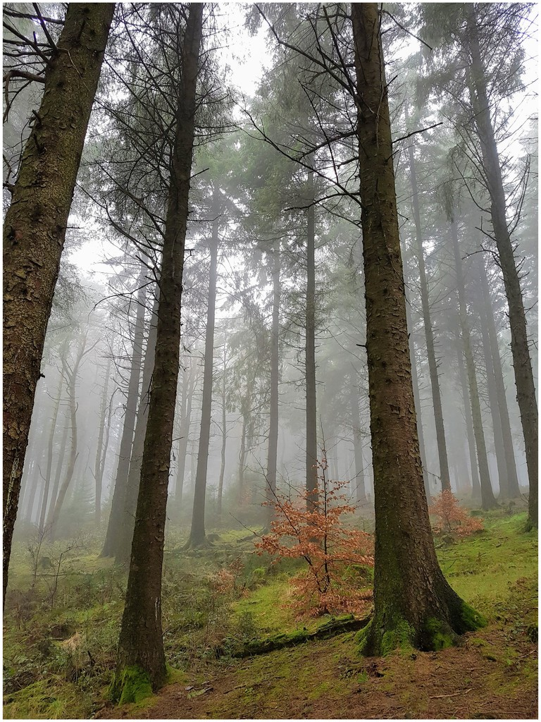 Beacon Fell Country Park in the fog by lyndamcg