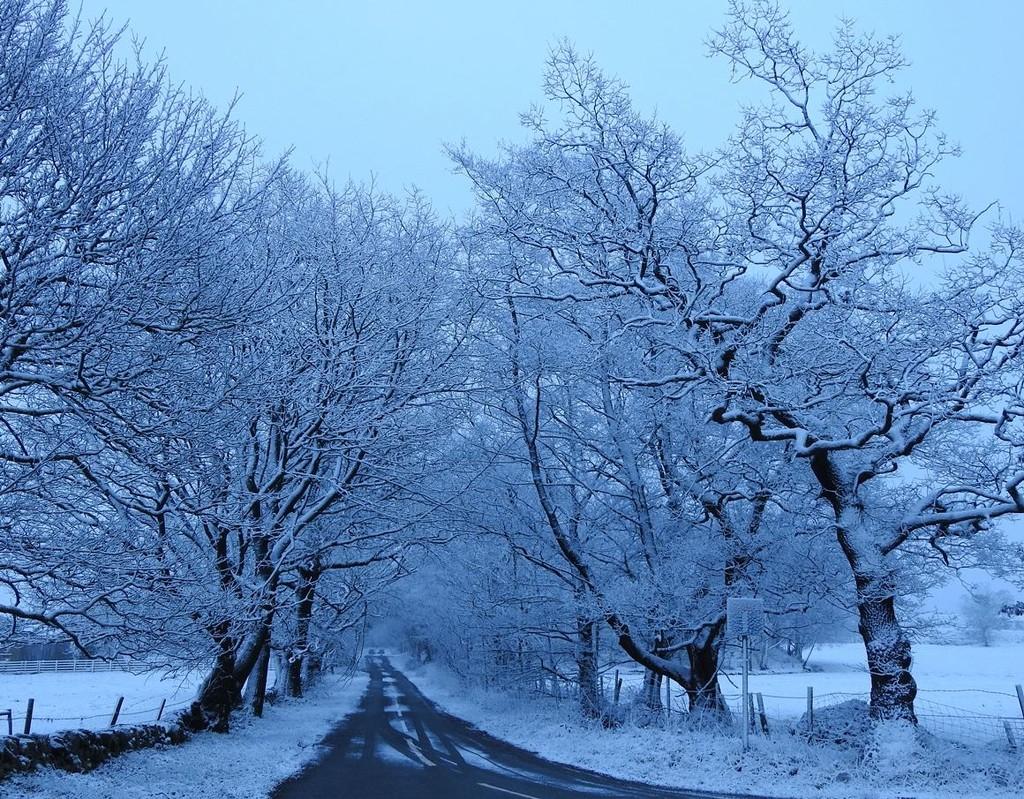 Fresh Snowfall by roachling