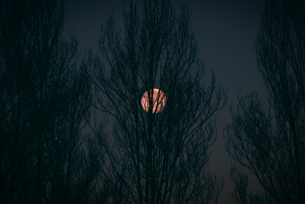 Day 22:  La Luna by sheilalorson