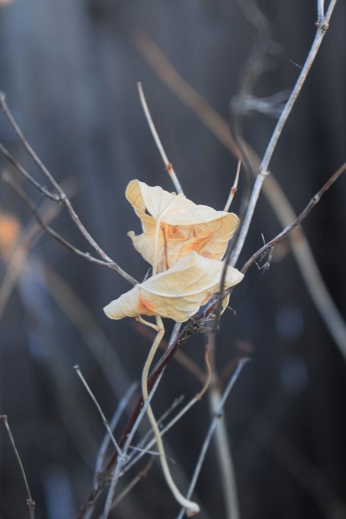 Windblown by sandlily