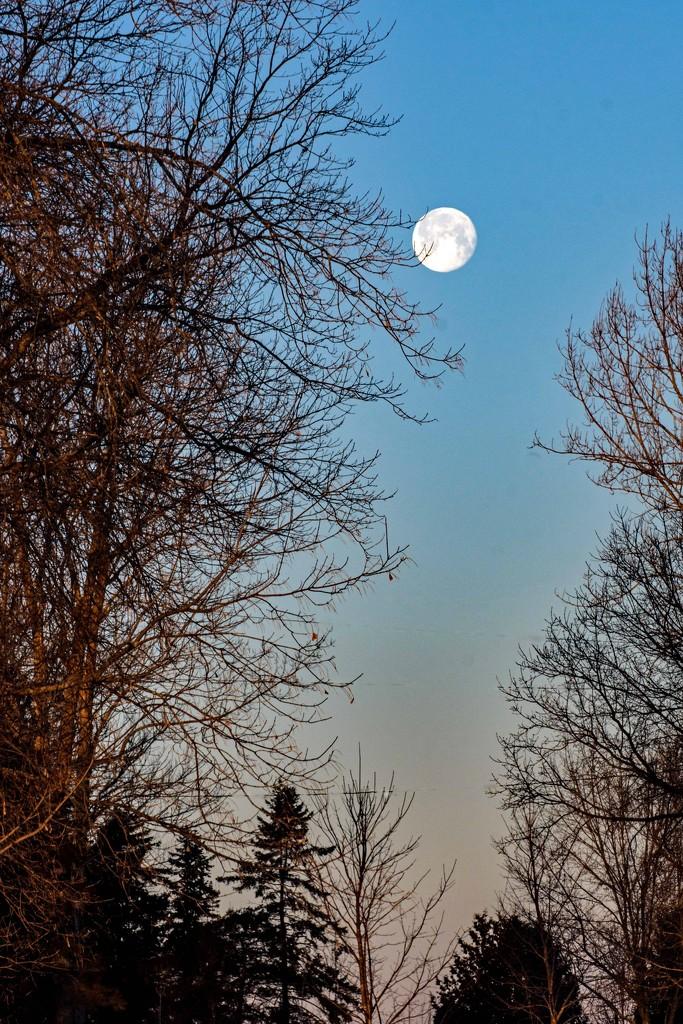 Setting Moon by farmreporter