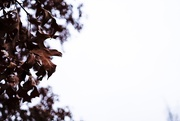 22nd Jan 2019 - All the leaves are brown and the sky is grey
