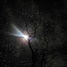 Super Moon through Icy Trees by olivetreeann