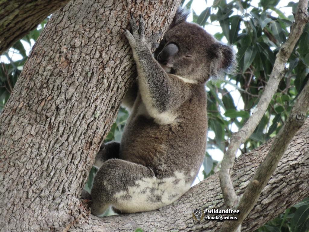 ahhhh me and my tree ... by koalagardens