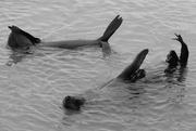23rd Jan 2019 - Wild water aerobics