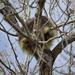 Back Side Of a Porcupine