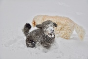 23rd Jan 2019 - Loving the Snow - Pet Challenge!