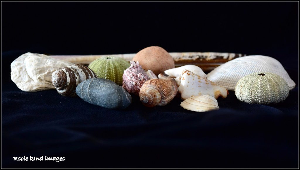 A collection of shells by rosiekind