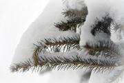 23rd Jan 2019 - More Snow!
