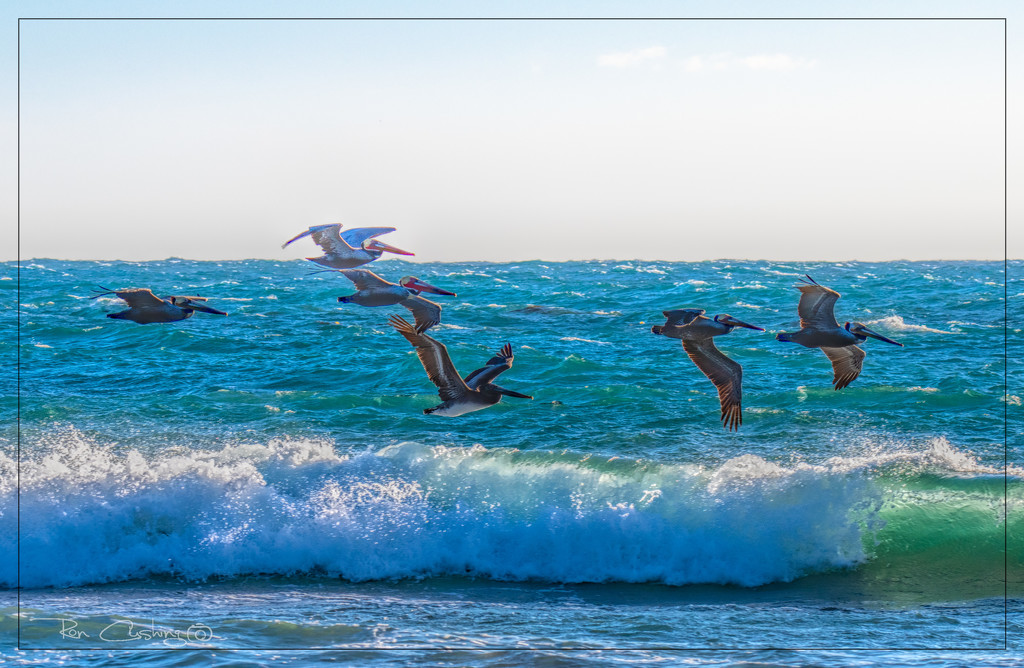 Pelican Squadron by stray_shooter