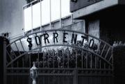 21st Jan 2019 - Sorento