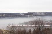 24th Jan 2019 - Foggy day