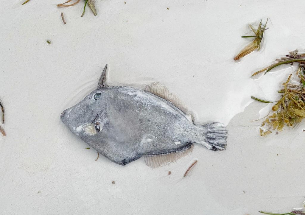 Dead fish.  by cocobella