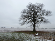 23rd Jan 2019 - Lone tree in the snow