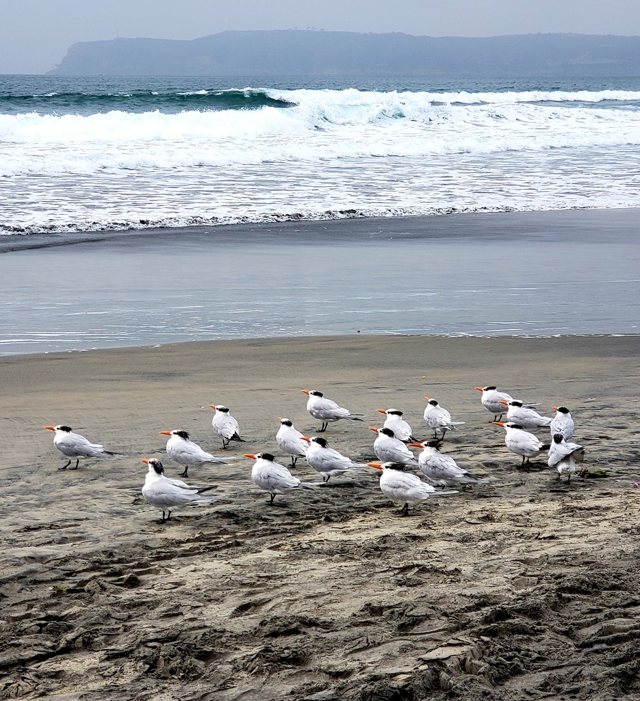 Flock of Seagull Soldiers by morrij10