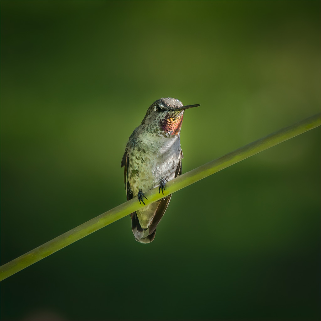 Hanging Out by mikegifford