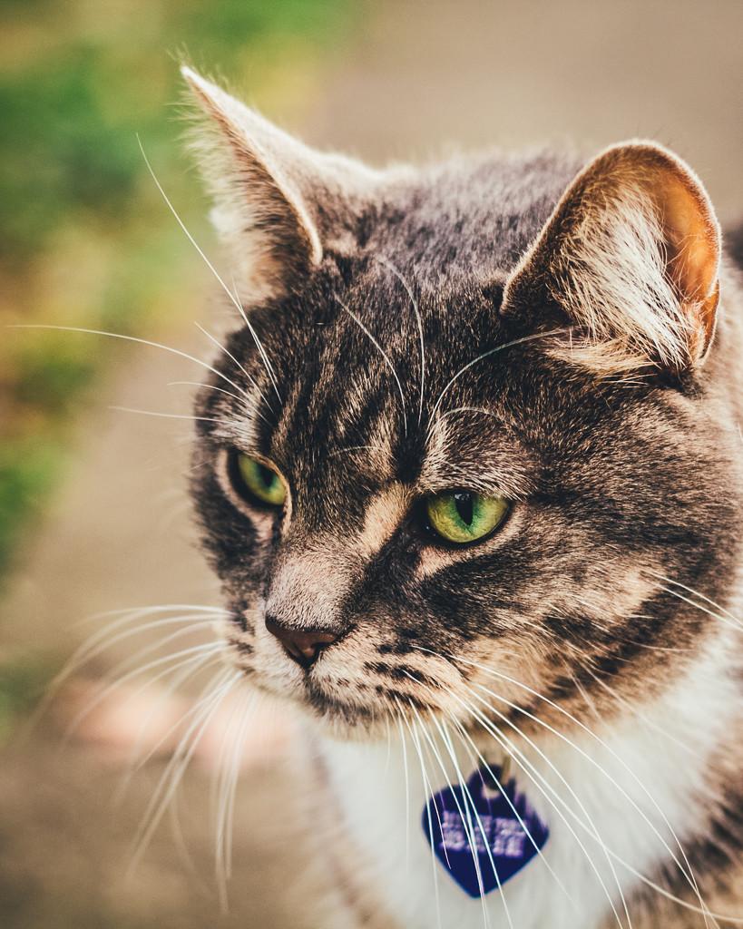 Neighbor Kitty by mamazuzi