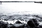 24th Jan 2019 - Don't swim tonight, my love