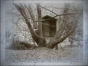 17th Jan 2019 - Treehouse