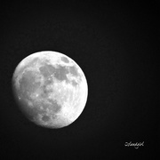 24th Jan 2019 - Full Moon