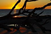25th Jan 2019 - Driftwood Beach Sunrise