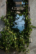 25th Jan 2019 - Ivy Window