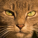Ferral Kitty Up Close! by rickster549