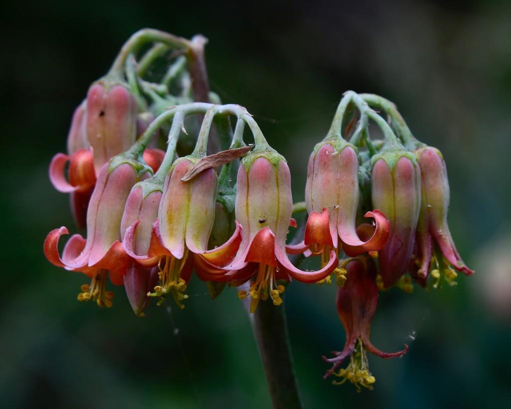 Flowers Before The Rain_DSC4865 by merrelyn