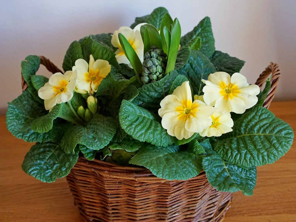 a basket of flowers by quietpurplehaze