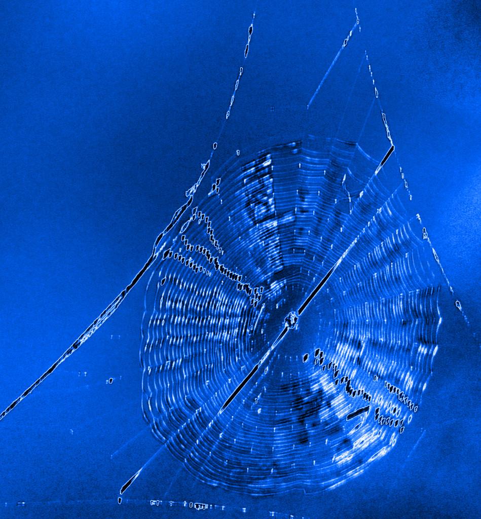 blue web by fr1da