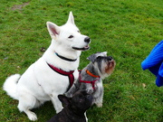 26th Jan 2019 - 3 Various Types Of Dogs