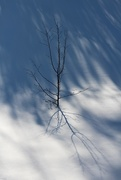 23rd Jan 2019 - Winter Shadows