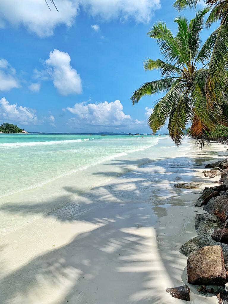Morning walk beach.  by cocobella