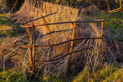 23rd Jan 2019 - Twisted fence