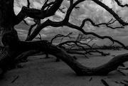 27th Jan 2019 - Driftwood Beach Stormy Skies