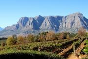 9th Dec 2018 - 2018 12 09 Stellenbosch winelands