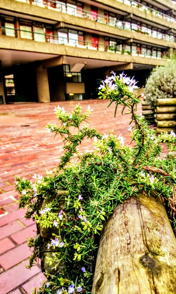 Rosemary on the Barbican estate by boxplayer