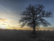 27th Jan 2019 - Sunset Tree