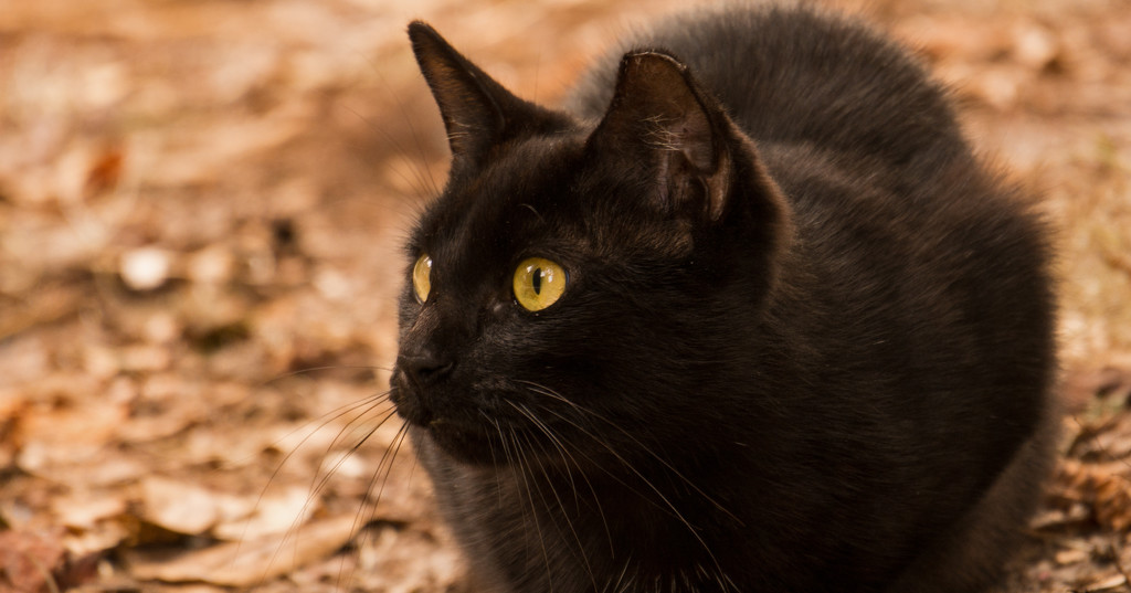 Another Feral Cat! by rickster549