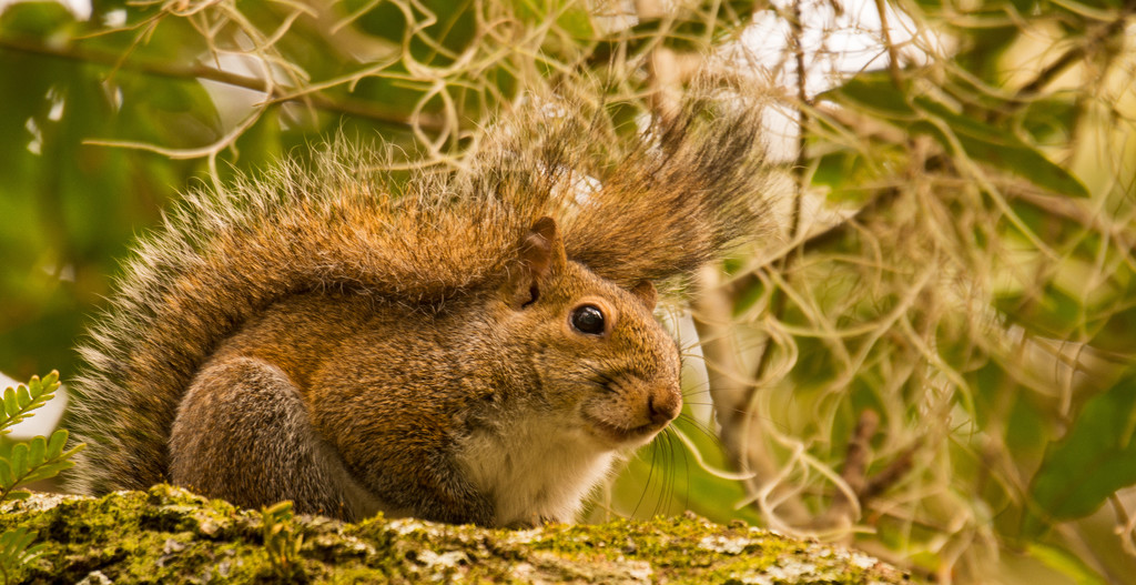 One More Mohawk Squirrel! by rickster549
