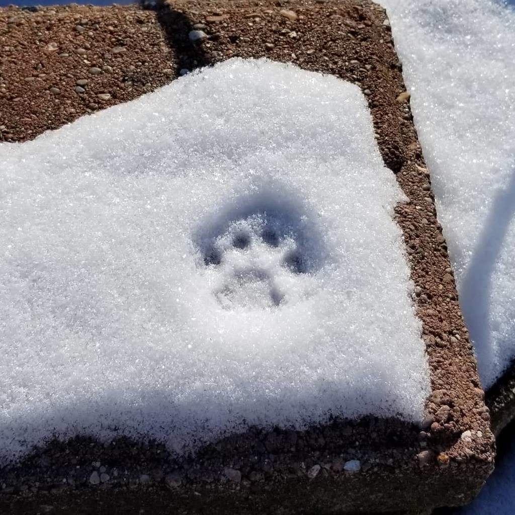 Snow Cat Footprint by scoobylou