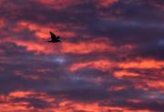 24th Jan 2019 - Beautiful sunrise
