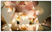 28th Jan 2019 - Orchid Vortograph